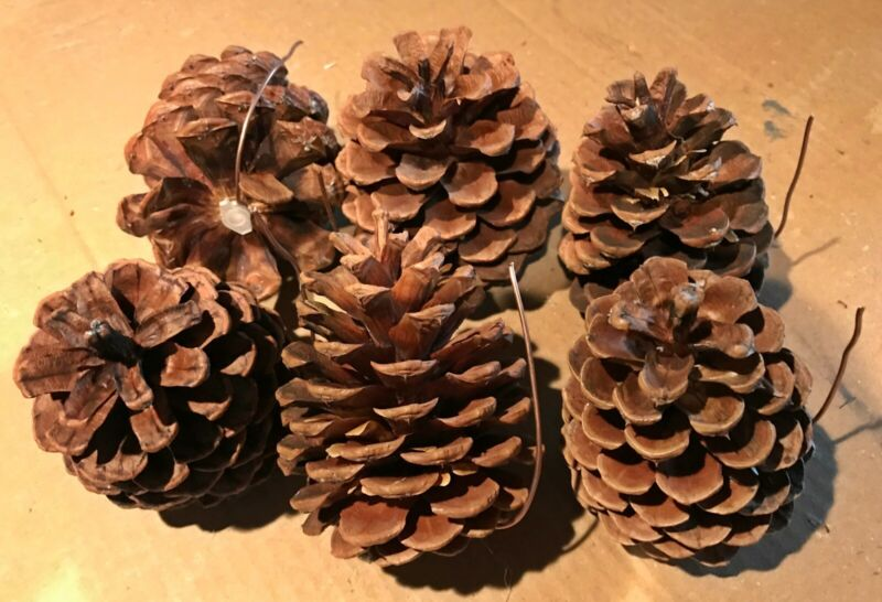 (6 Pack) Pine Cone Geocache Containers - Nature