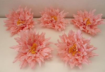 5 x Pfingstrosenblüte  Pfingstrose Peonie rosa  Blumenköpfe