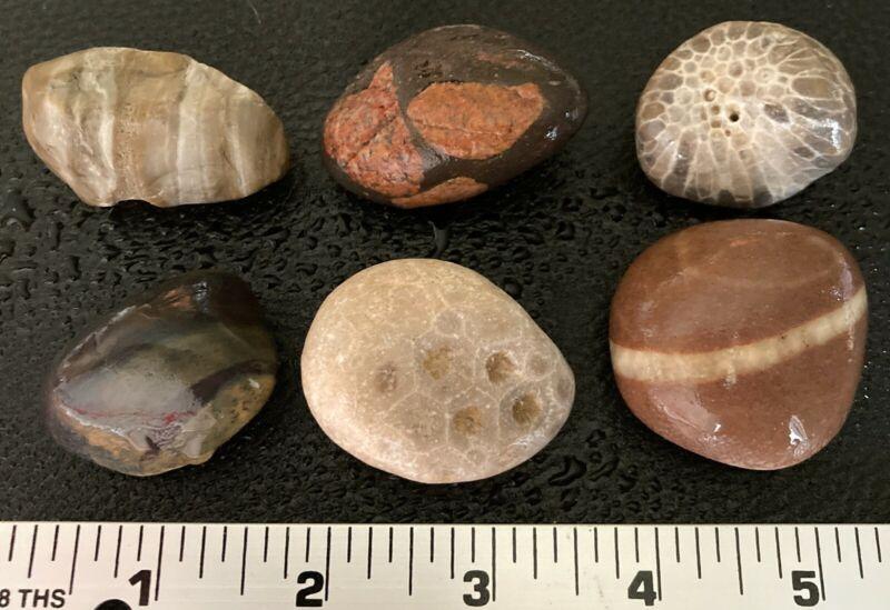 6pc Michigan Gems - Gowganda Tillite Petoskey Stone Favosite Jasper Banded Chert