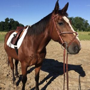 Jumper figure 8 bridle size full