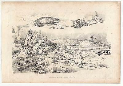 Alken-Hunting-Jagd-Dachse-Hunde - Kupferstich 1817