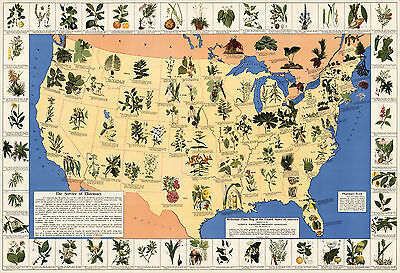 Mid Century Medicinal Plant Map Of The Usa Historical Home School Wall Poster
