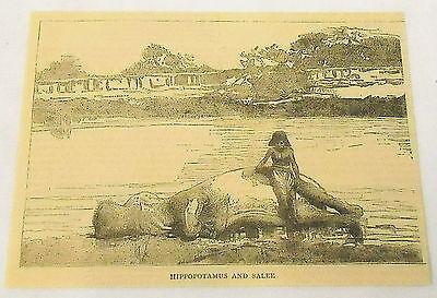 1884 small magazine engraving ~ HIPPOPOTAMUS AND SALEE ~ Sudan