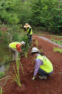 Australia Day Tree Planting - Lake Barrine Cairns Cairns City Preview