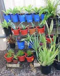 Assortment of plants for sale Cheltenham Charles Sturt Area Preview