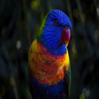 Подставки RAINBOW PARROT TROPICAL BIRD COASTERS