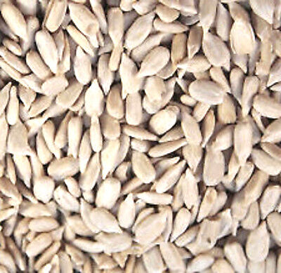 20 kg SUNFLOWER HEARTS FOR WILD BIRD PREMIUM BAKERY GRADE Dehulled Kernels Seeds