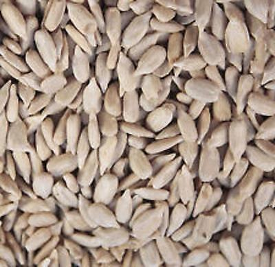 SUNFLOWER HEARTS 5 kg BIRD FEED NO MESS NO HUSKS BIRDS LOVE THEM