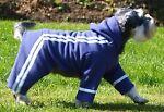 Rita s Made to Measure Dog Coats