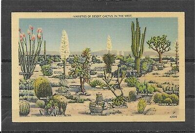 """Vintage Unposted Linen Postcard of """"Varieties of Desert Cactus In The West"""""""