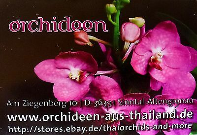 thaiorchids-and-more