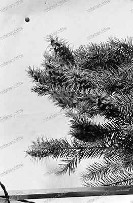 Negativ-Tannenzweig-Pflanze-Tannenzapfen-Stillleben-1930er Jahre-1930s-1