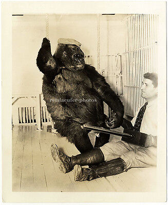 Gorilla mit Mütze, Hand in Hand mit Zirkusartist, Großes Original-Photo um 1920.