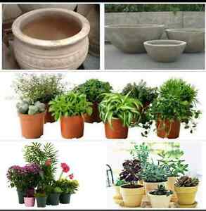 Wanted - Plants and pots Wallsend Newcastle Area Preview