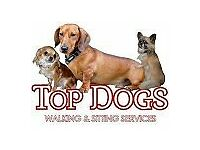 top dogs walking and sitting services