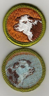 Beef Production Merit Badge, Type H, Blue Back Version (1972-75), Mint!