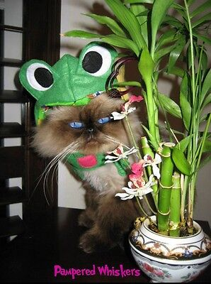 Cats And Dogs Halloween Costumes (Infrognito Halloween frog costume for cats and dogs 12-15