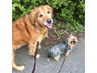 LEAD THE WAY Dog-walking Service in the Ashgrove/Kittybrewster Area of Aberdeen
