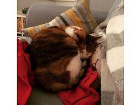 Beautiful female cat *free to good home*