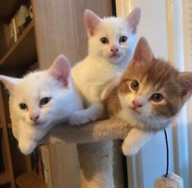 3 female kittens
