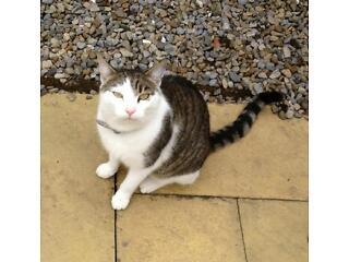 Missing cat, acomb