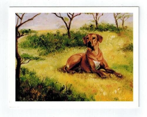 Rhodesian Ridgeback Sitting Notecard Set - 12 Note Cards By Ruth Maystead RHR-5