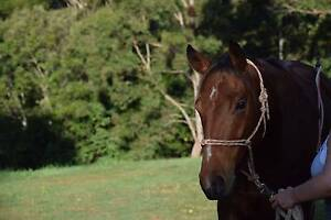 WANTED: Horse Acreage -  Clarence Valley, Grafton, Coffs Harbour Glenreagh Clarence Valley Preview