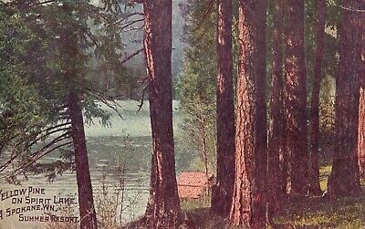 Vintage Postcard 1909 Yellow Pine on Spirit Lake. Summer Resort A Spokane WN