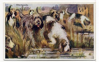 OTTERHOUND DOGS AT WORK  OLD  DOG ART POSTCARD