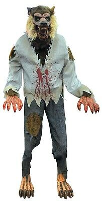 Life-Sized Lurching CURSED WEREWOLF Animated Prop HALLLOWEEN Realistic Creature