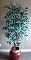 VARIEGATED SILK FICUS TREE