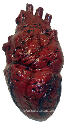 Realistic Latex Human Heart Prop Halloween Horror Accessory Laboratory Body Part - Heart Prop