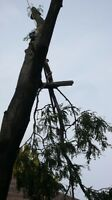 AFFORDABLE TREE REMOVAL & CONTRACTING SERVICE'S
