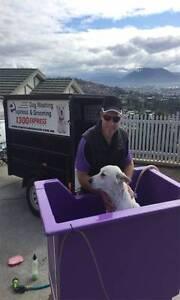 MOBILE DOG WASHING - GUARANTEED INCOME - Northern Tasmania Launceston Launceston Area Preview