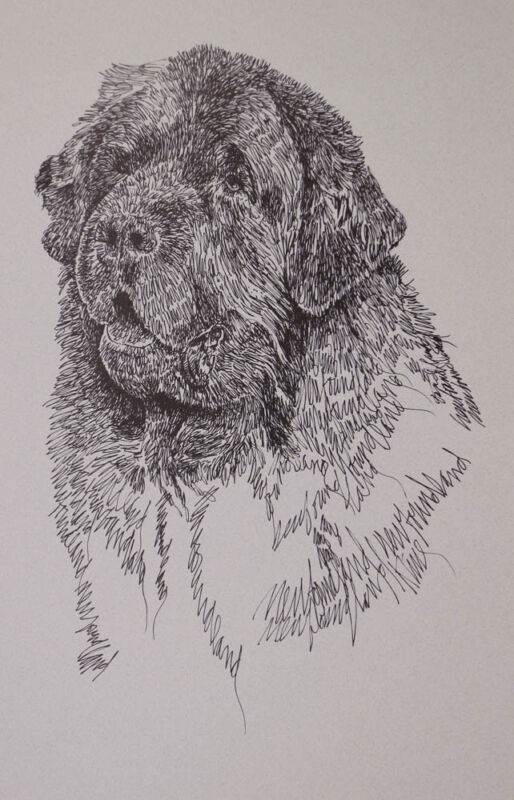 Newfoundland Dog Art Lithograph #34 Kline will draw your dogs name free. NEWFIE