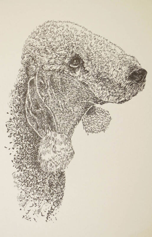 Bedlington Terrier Dog Art Lithograph #24 Kline will add your dogs name free.