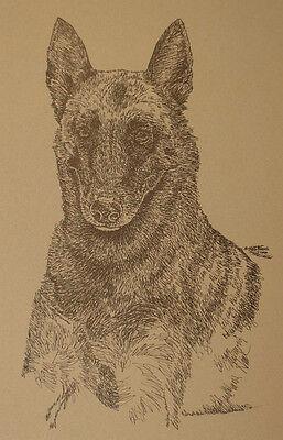 Belgian Malinois Dog Breed Art Print Lithograph #38 Kline adds dogs name free. segunda mano  Embacar hacia Argentina