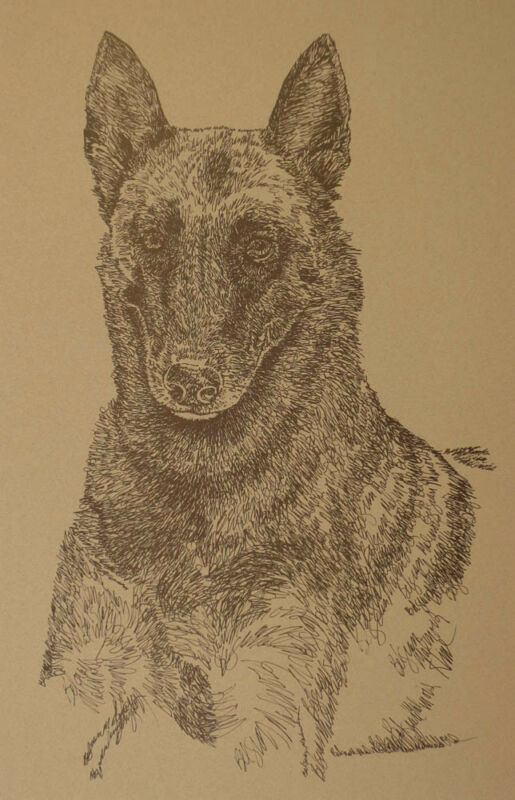Belgian Malinois Dog Breed Art Print Lithograph #38 Kline adds dogs name free.