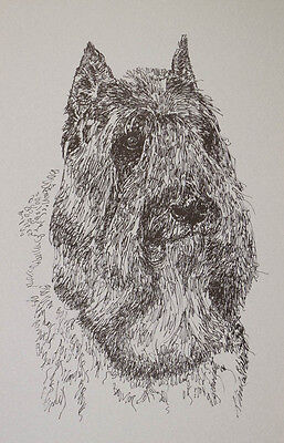BOUVIER des FLANDRES DOG BREED ART PORTRAIT PRINT #93 Kline adds dog name free.