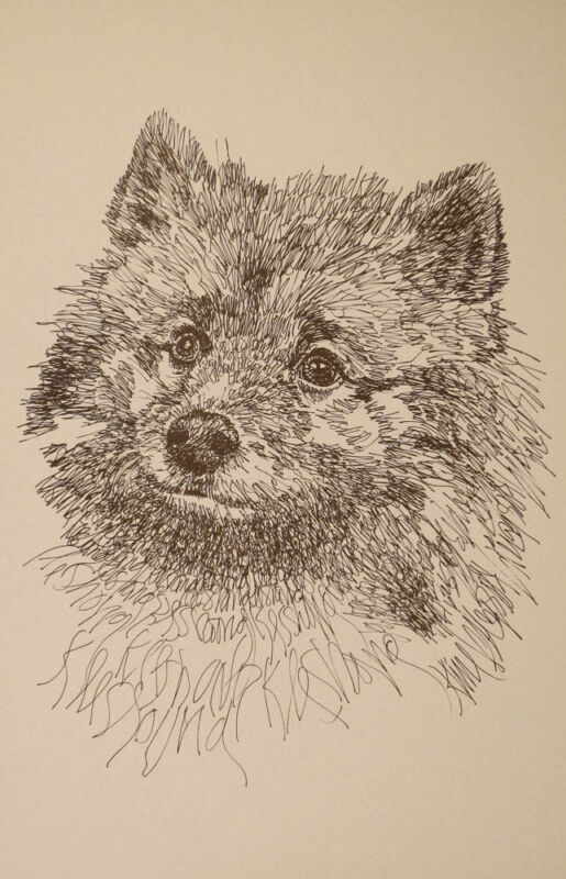 Keeshond Dog Breed Art Portrait Print #41 Kline draws your dogs name free. GIFT
