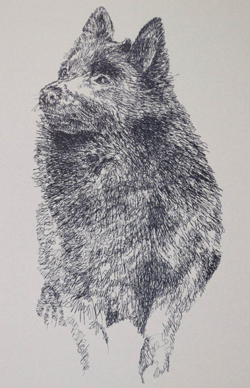 Schipperke Dog Breed Art Print Signed Lithograph #99 Kline adds dog name free.