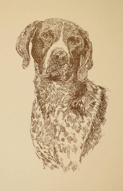 German Shorthaired Pointer Dog Art Portrait Print #53 Kline adds dog name free.