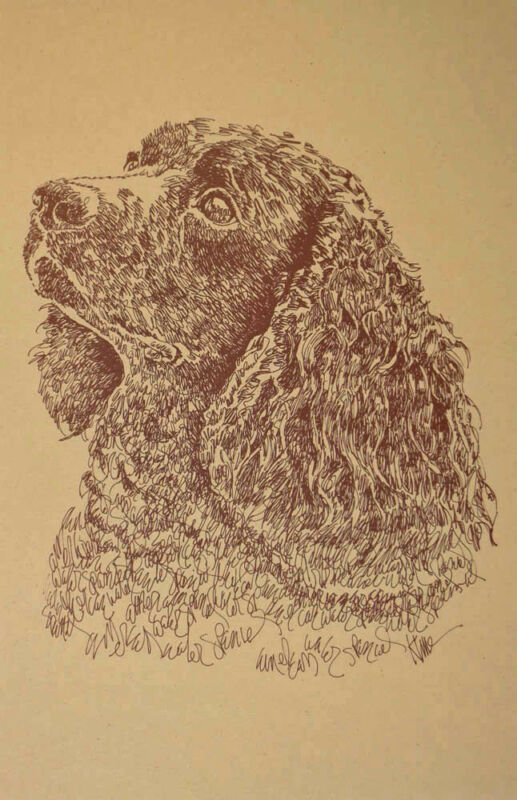 American Water Spaniel Signed Dog Art Lithograph #45 Kline adds your dogs name.