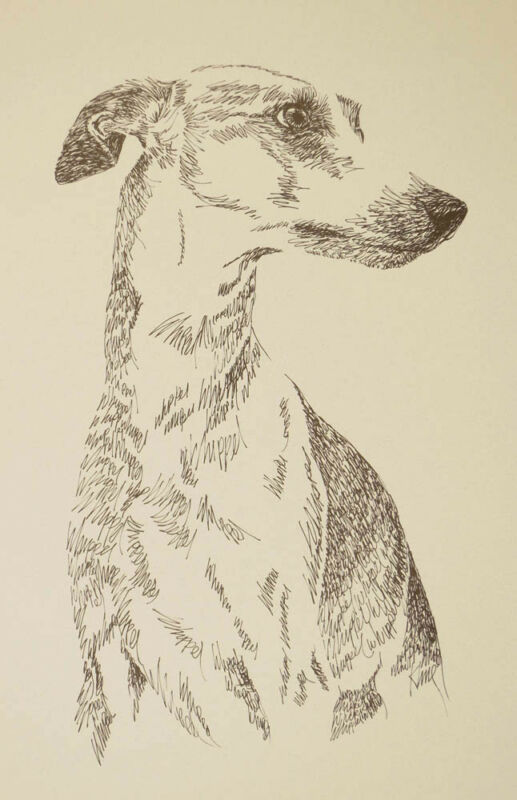 Whippet dog art portrait drawing. Print 89 Kline adds dog