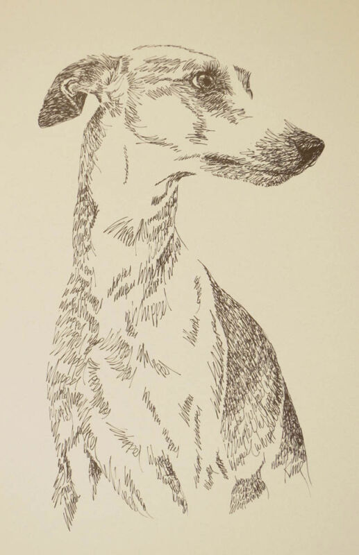 Whippet dog art portrait drawing PRINT 132 Kline adds dog