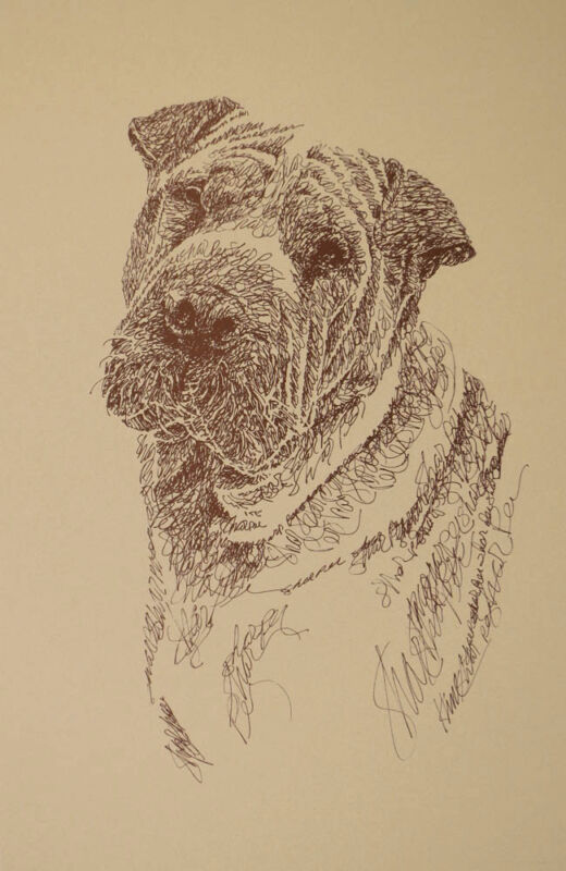 SHAR PEI DOG ART #32 Artist Stephen Kline adds your dogs name free. GREAT GIFT