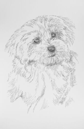 Maltese Two Dog Breed Art Print #19 Stephen Kline Signed Drawing from Words