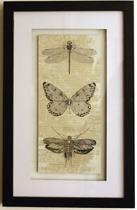 Stylish-BLACK-WHITE-INSECT-PICTURE-Print-Framed-Dragonfly-Butterfly-Moth-NEW