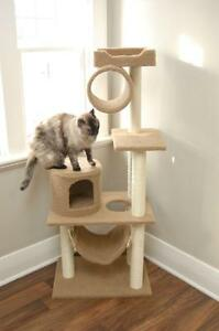 Cat Boarding with Your cats comfort in mind! London Ontario image 3