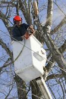 Calgary tree removal by Your Tree Doctor